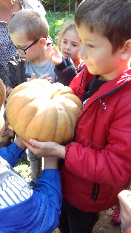 Animation pédagogique autour du jardin d'automne en CP-CE2