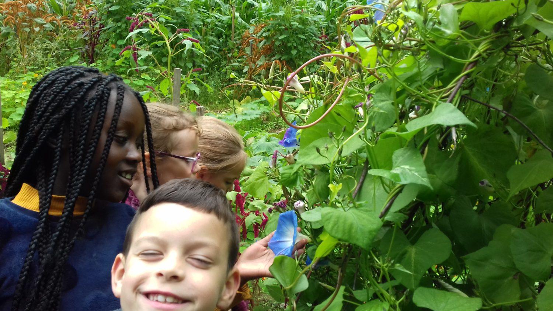 Visite du jardin de Mathurin