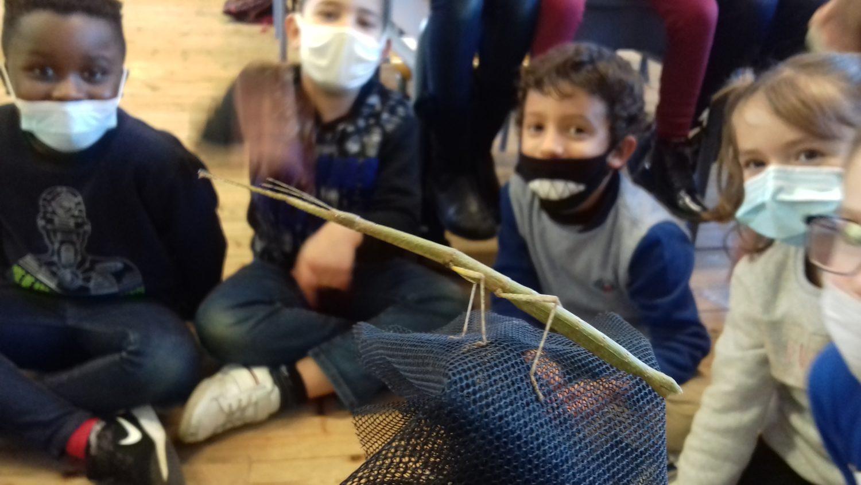 Des insectes étranges dans la classe